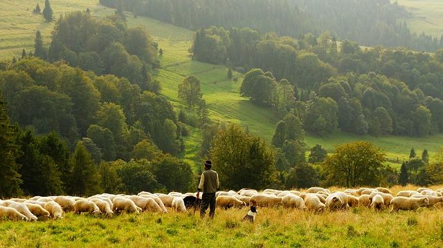 zemědělství.jpg